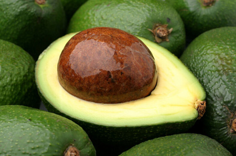 Aguacates_1