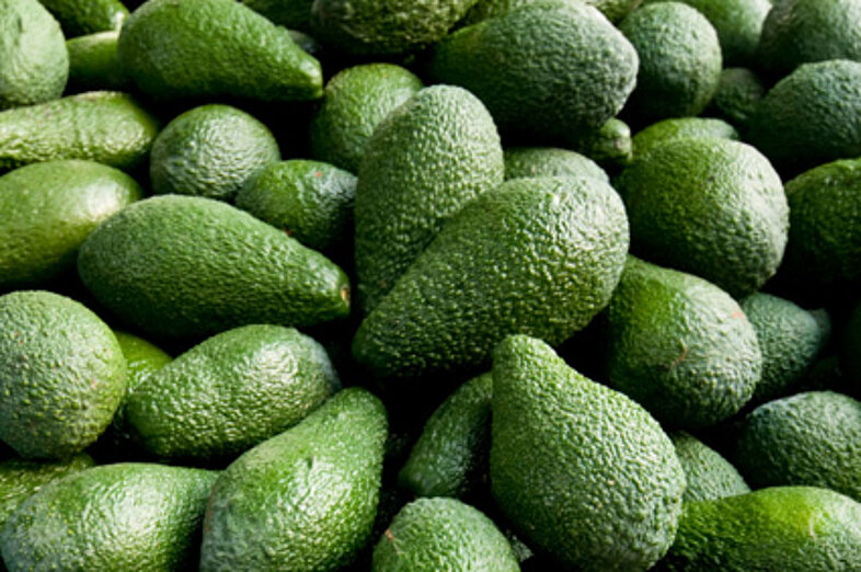 Aguacates_3